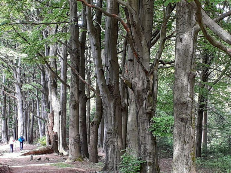 Qi Gong im Wald Regina Herrmann